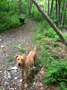 My hiking companions